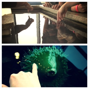 Hands on touch pool at the aquarium!