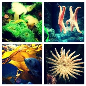 We saw all kinds of creatures during our day.