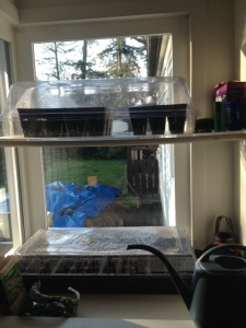 I love our little solarium window.  The seeds love the window, too.